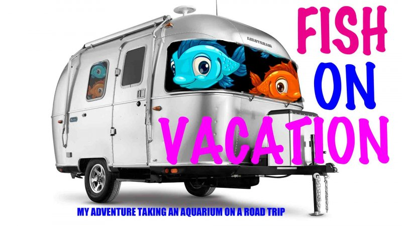 Fish On Vacation: Travelling With My Aquarium